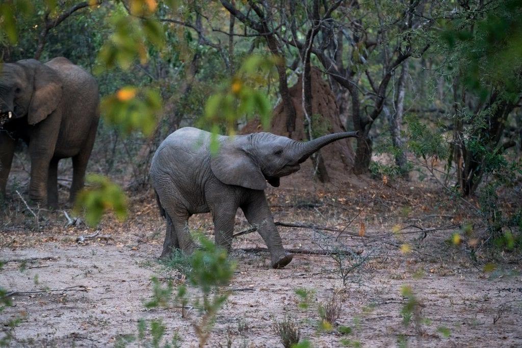 safari rejser afrika