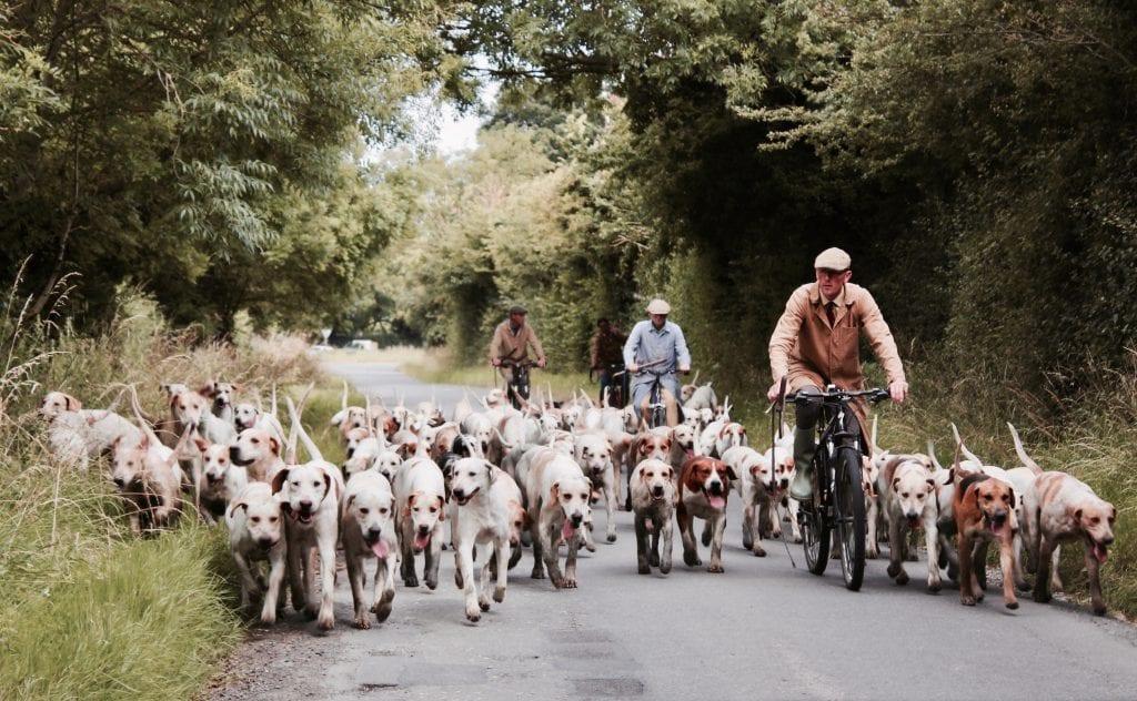 Australien - hunde og cyklister