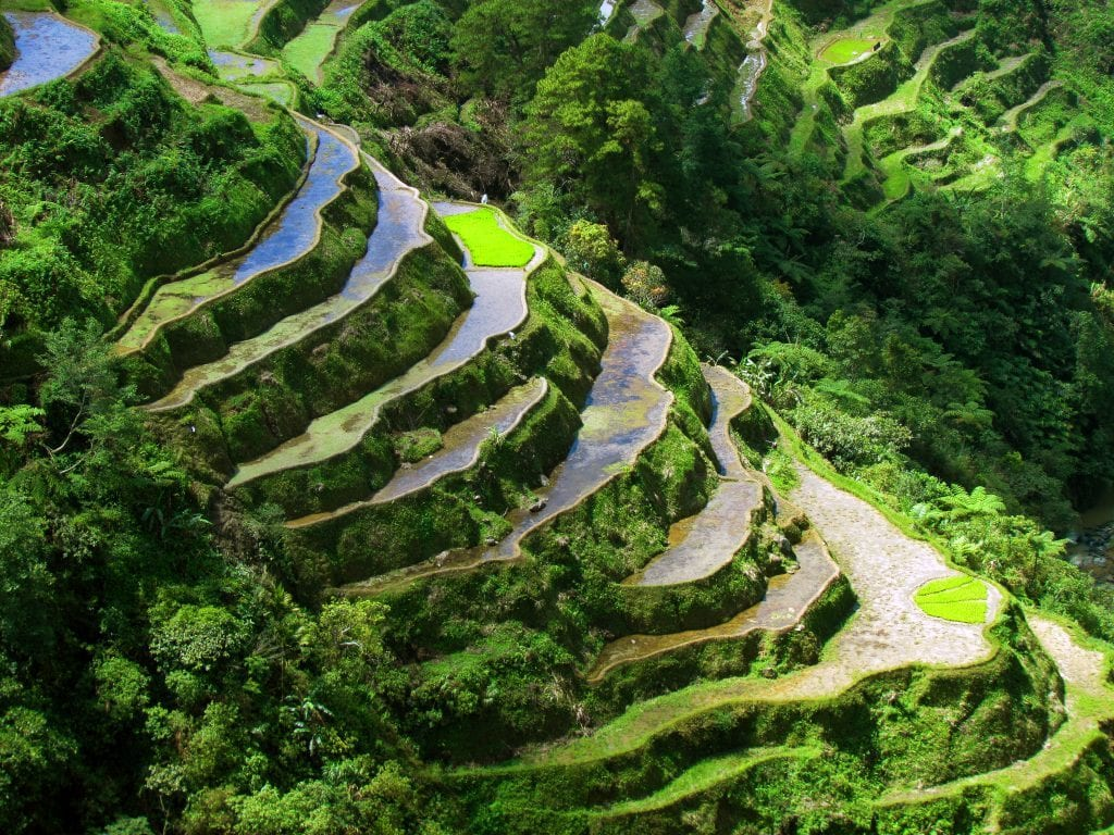 Filippinerne - Banaue, risterrasser - rejser