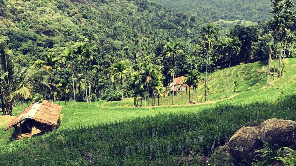Sri Lanka - rejser