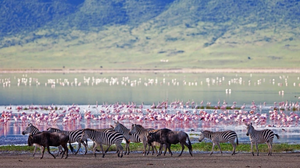 Tanzania - ngorongoro-krater- rejser