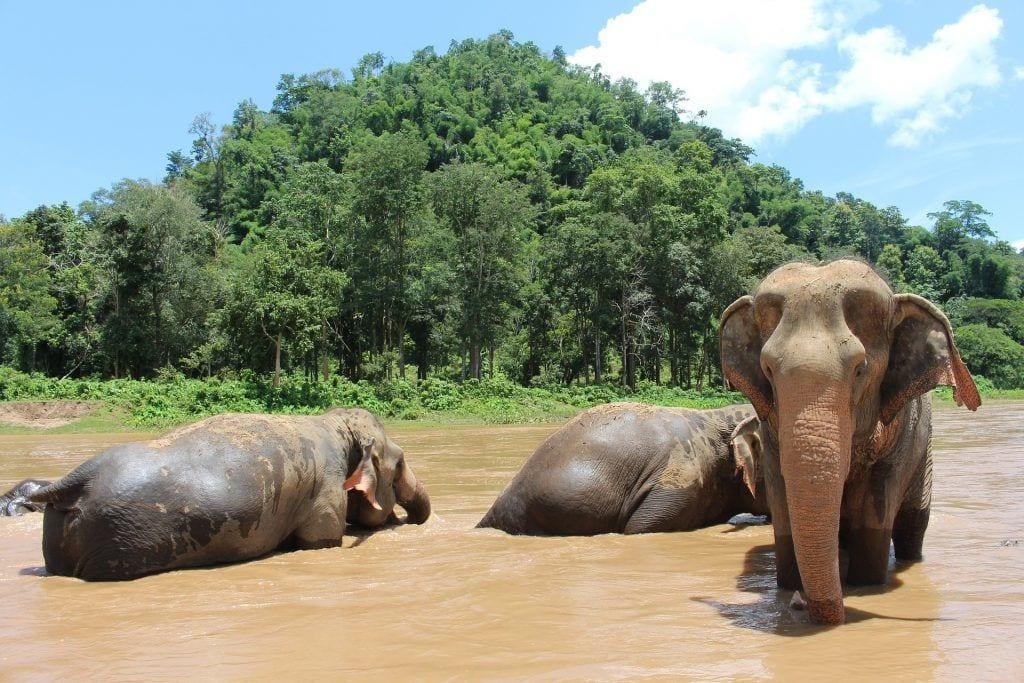 Thailand - elefanter