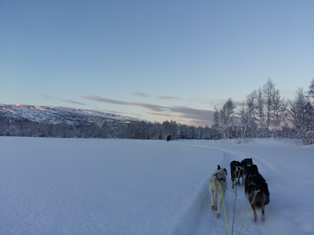 Norge - Alta, hundeslæde, hunde - rejser