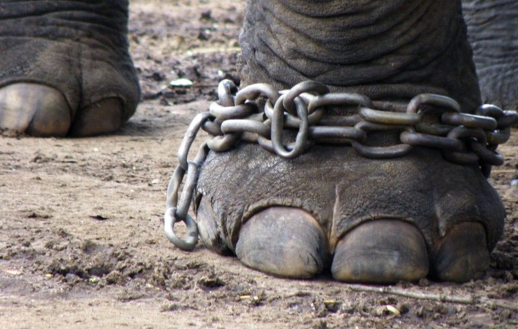 Elefanter - rejser