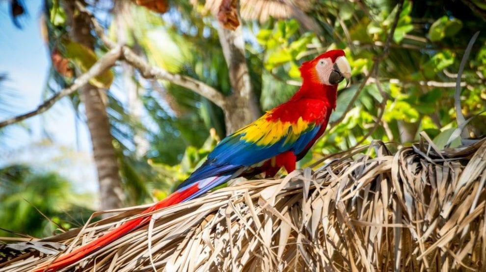 Costa Rica - papegøje - tropisk - rejser