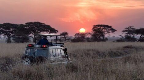 Safari - Serengeti - Tanzania