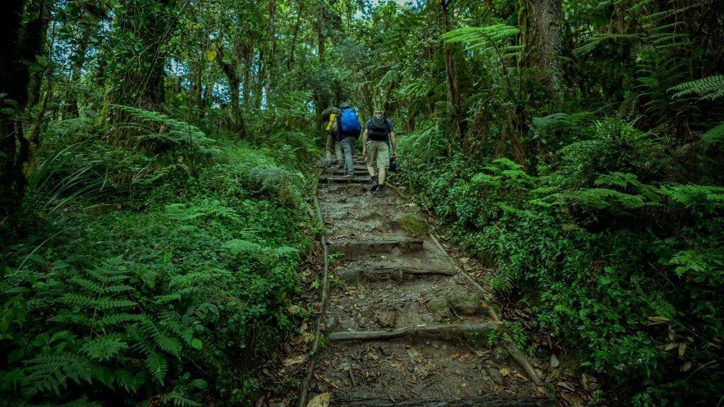 Tanzania - Kilimanjaro (Rickshaw4) - rejser
