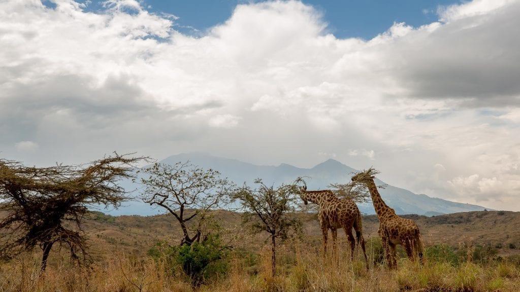 Tanzania - Kilimanjaro (Rickshaw6) - rejser