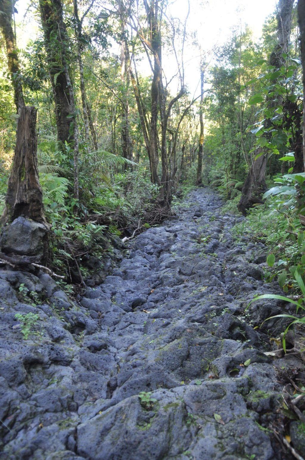 Comorerne - lava skov natur - rejser