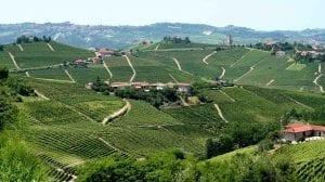 Italien Piemonte vinmarker rejser -