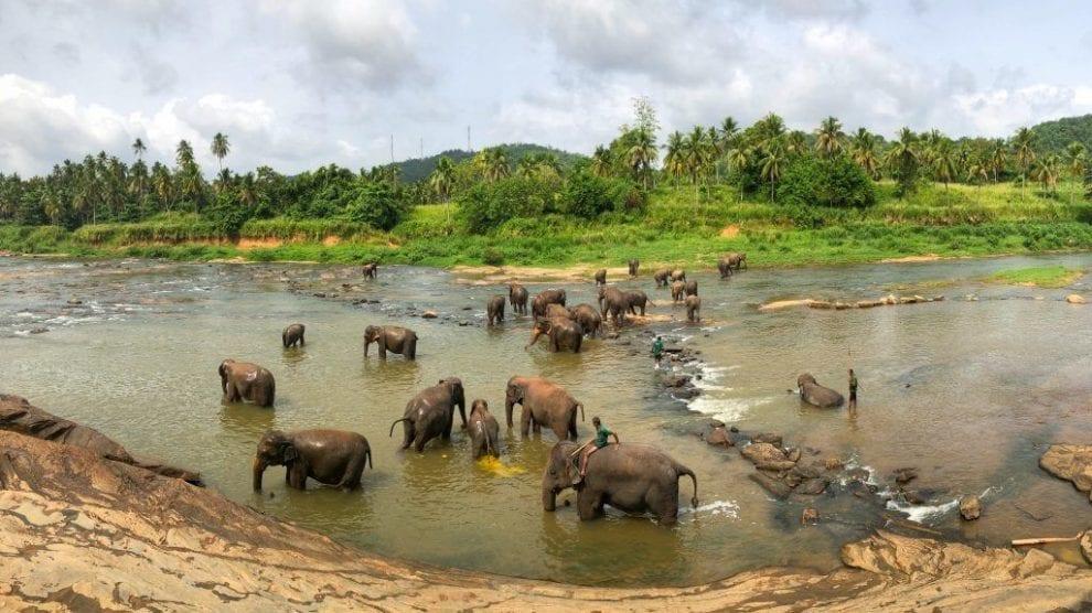 Sri Lanka - Natur - Elefanter - Rejser