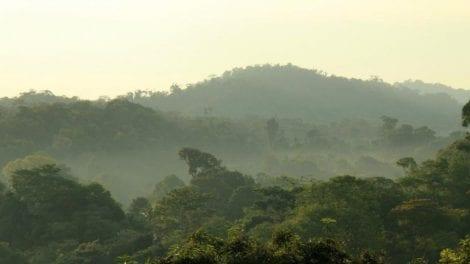 Regnskov - Costa Rica - Rejser
