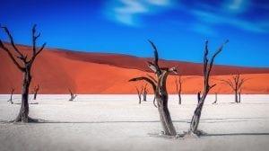 Namibia - træer ørken natur - rejser