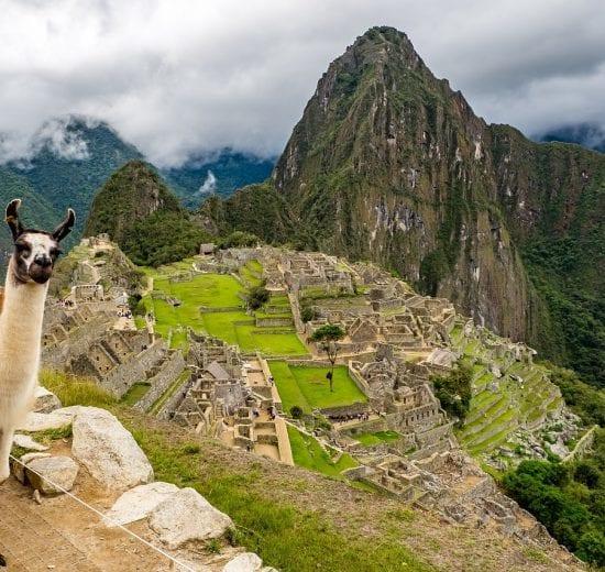 Peru - lama machu picchu bjerge - rejser