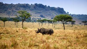 Familiesafari - Kenya - Rejser