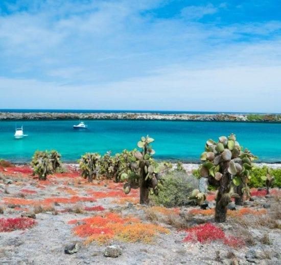 Hav - Galapagos - Rejser