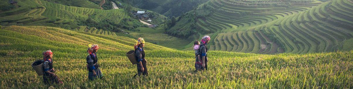 Vietnam-salt-høst-vand