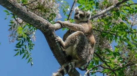 Madagascar - natur - rejser