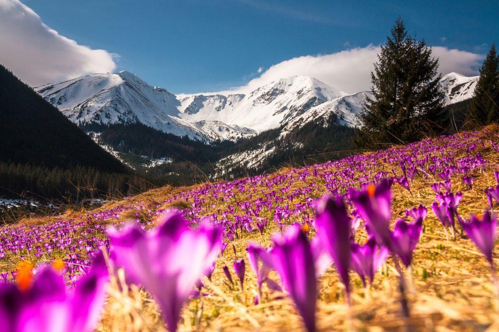 slovakiet - bjerge blomster - rejser