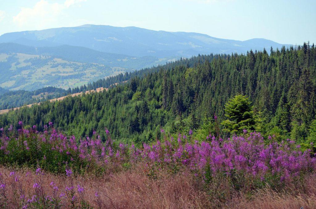 Rumænien - Apuseni, bjerge - rejser