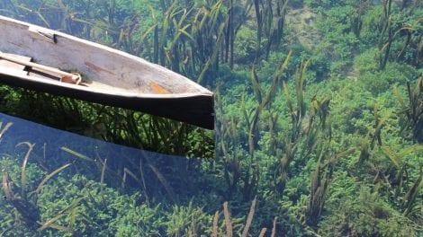 Sulawesi - natur - rejser