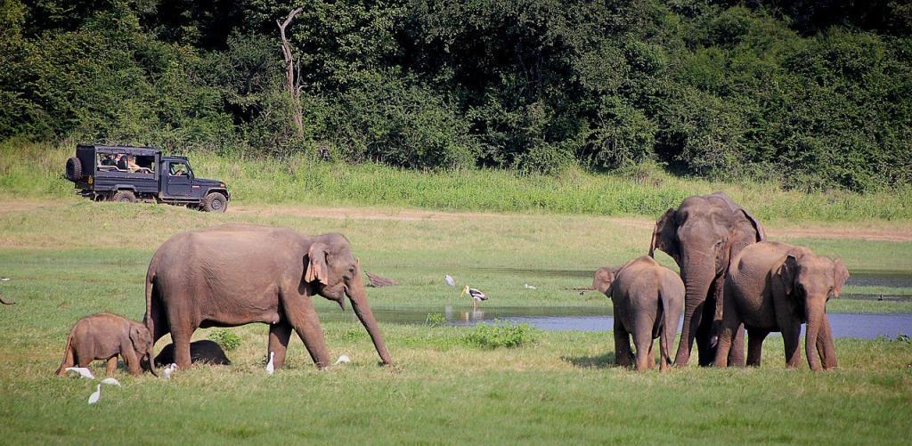 Sri Lanka - elefanter - rejser